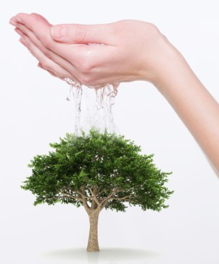 Lady's hands watering a tree