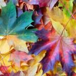 Fallen leaves in November