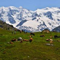 Muottas Muragl to Alp Languard - A Hot Hike