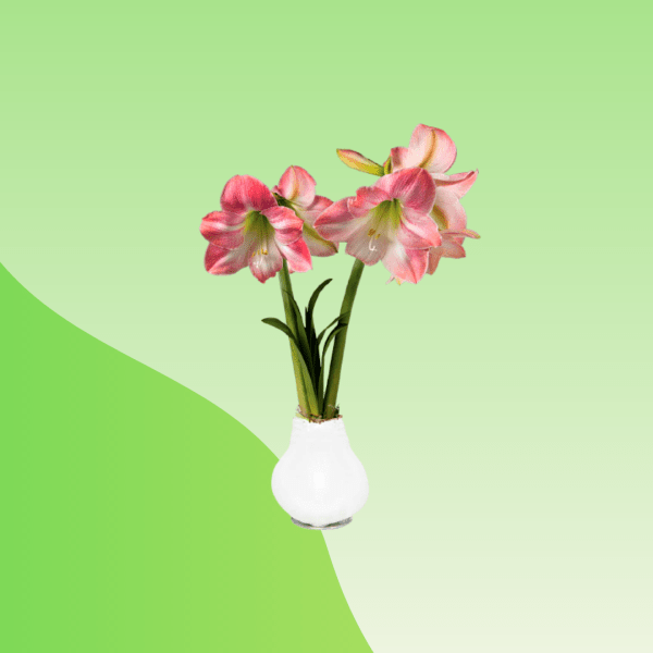 buy flower bulbs online