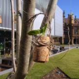 Cork Tree - Detail