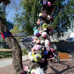 Boobie Tree daytime