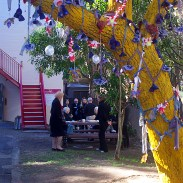 Venerated Jacaranda Tree