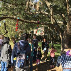 Listening Tree - Mt Annan