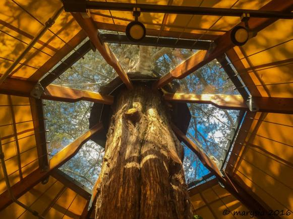 Gasketed roof of an Aurora treehouse