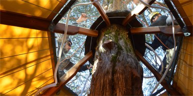 Members of the Tree Wise team installing the roof of a treehouse