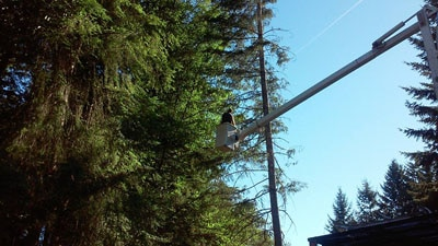 Tree Trimming and Pruning, tree trimming, tree pruning