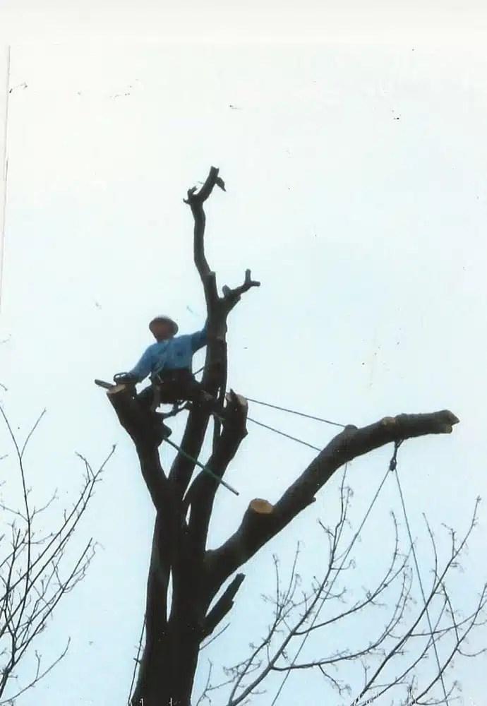 Joaquin's Tree Expert
