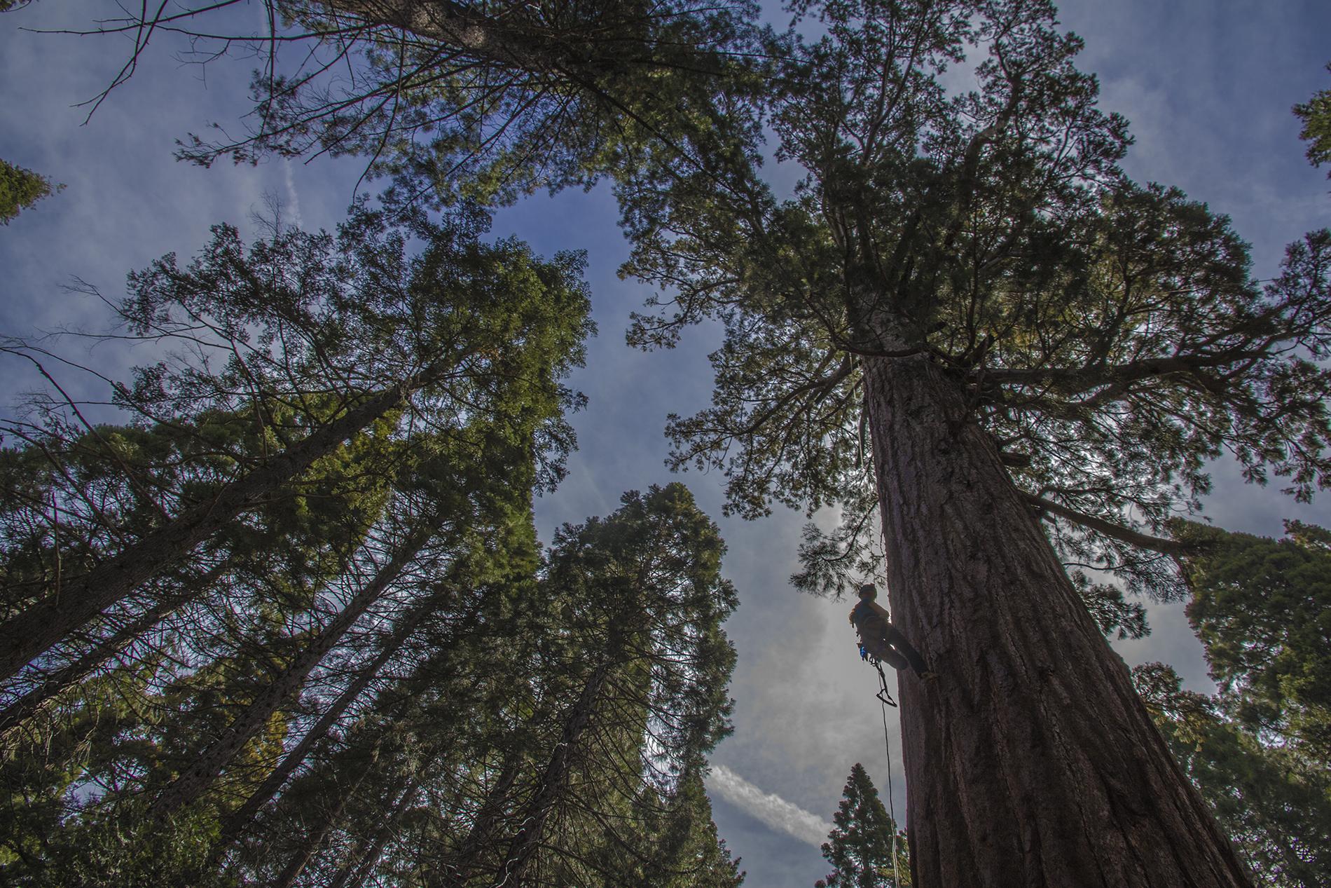 __1 ag redwoods