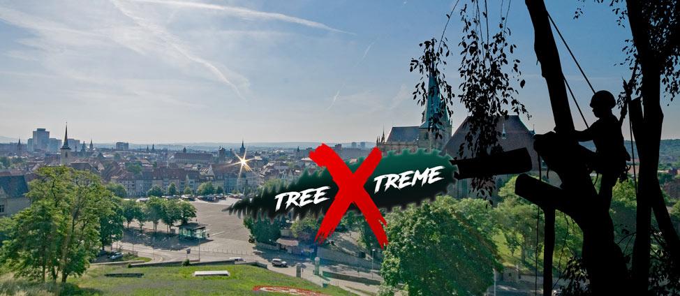 Baumpflege Erfurt | treeXtreme Baumkletterer Erfurt