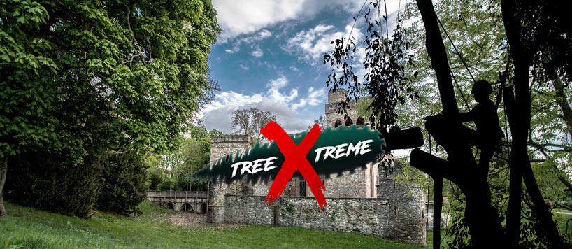 Baumpflege Wiesbaden | treeXtreme Baumkletterer Wiesbaden