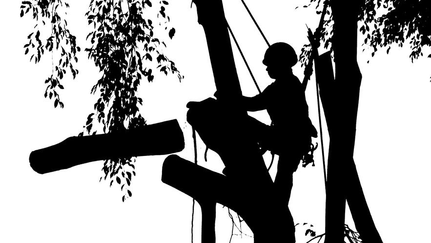 treeXtreme Baumkletterer Berlin