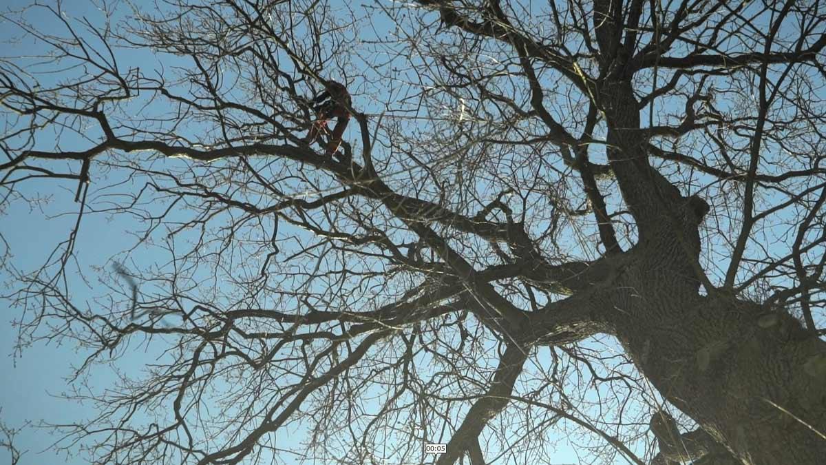 Baumpflege-Blankenfelde-Mahlow