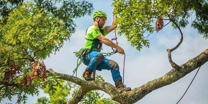 International Tree Climbing Championships
