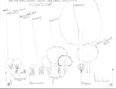 Hand Drawn Urban Food Forest, Section View, Cincinnati, Ohio, USA 2009