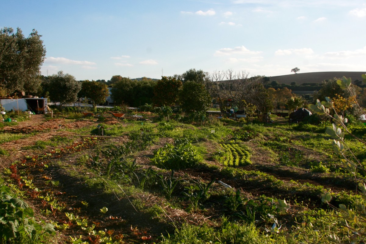 Ecological Consultancy and Permaculture Design