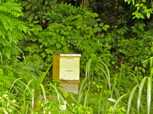 "One of the seven bee boxes on the forest edge, its ""winter"" and raining so we leave the honey for them"