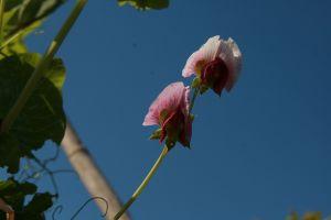 nitrogen fixing flower