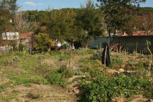 Quinta dos sete nomes northside of forest garden implementation