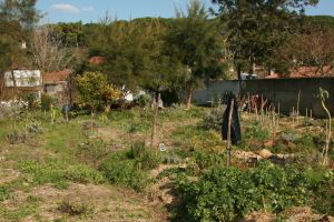Quinta dos sete nomes northside of forest garden implementation