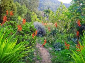 Casita Verde Landscape