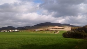 The wheat field from the far corner of the land in March, 2016