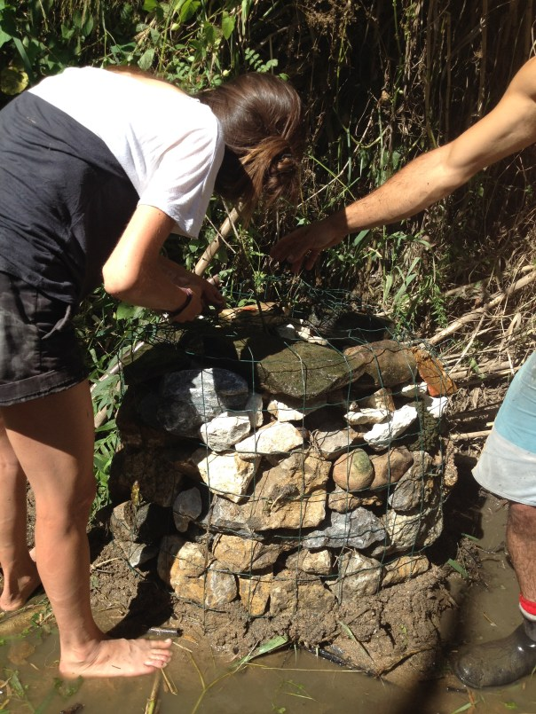 Louise adding stones to the gabbion planting basket