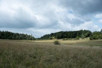 landscape, photo by Leigh Vukov