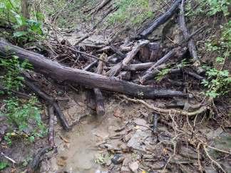 large woody debris dams holding back sediment in stream at Treasure Lake, KY