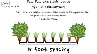 727 animation of paw paw and black locust 6