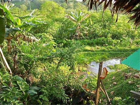 Chinampa in Panama that was my inspiration, 2005