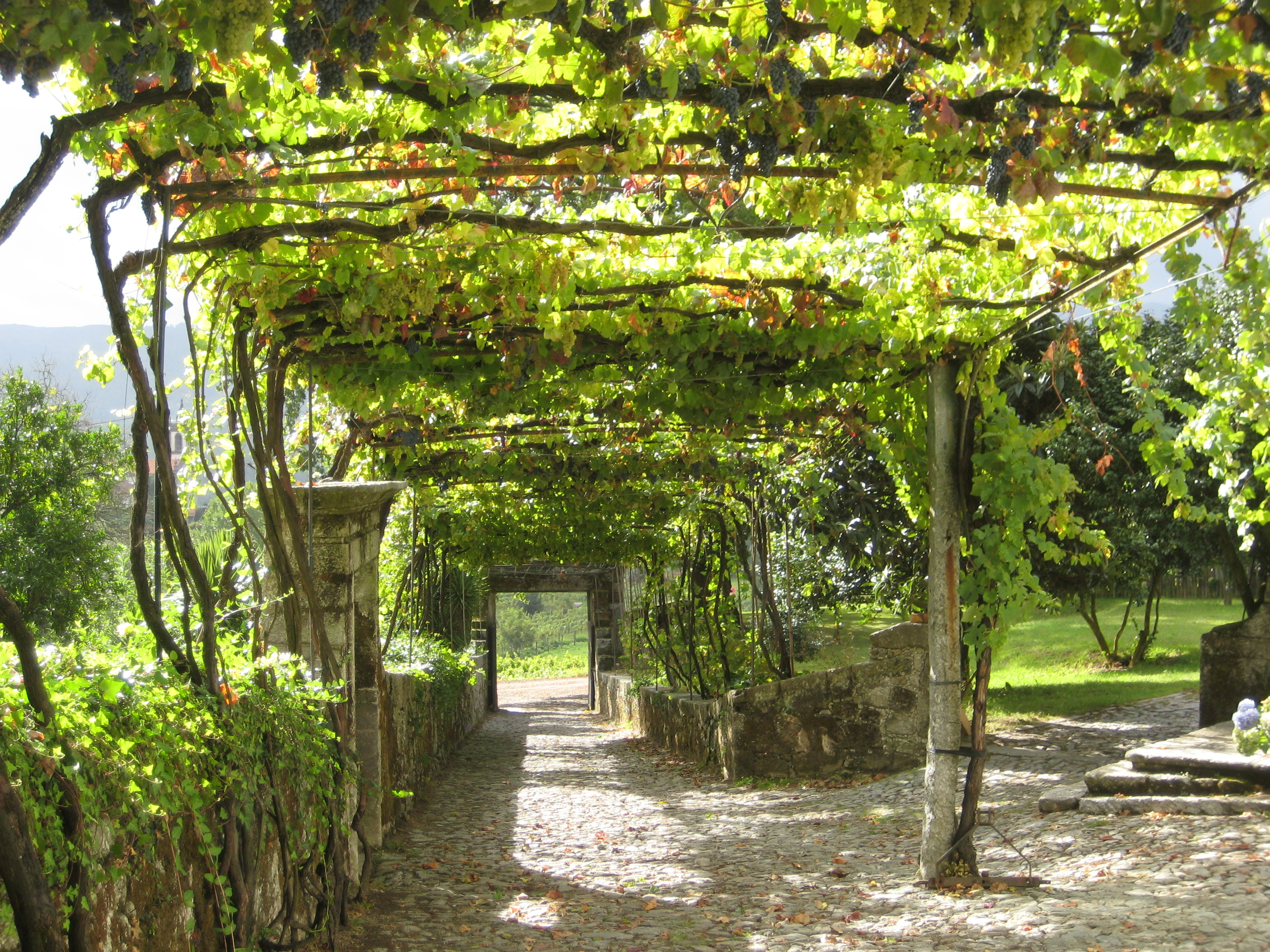 Aphros Winery Braga Portugal The Far North S Grape Arbor