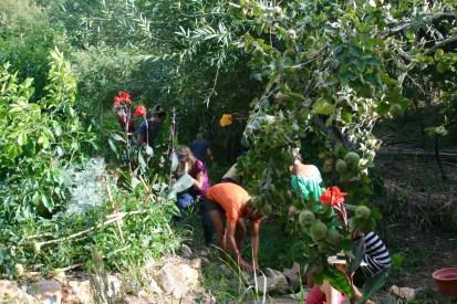 Gabion construction and aquatic plantings for stream management
