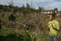 Doug and tree pruning