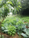 Polyculture gardening with tree crops