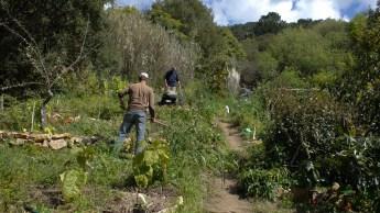 Planting on Sunday