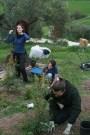 hedge planting with Itai