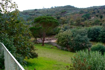 Same Property in Tabua region of Central Portugal, in background mosaic of abandoned land, Eucalyptus and Pine plantation