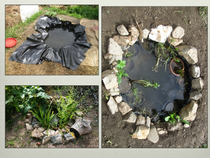 Tyre Pond Permaculture Design Course Handbook