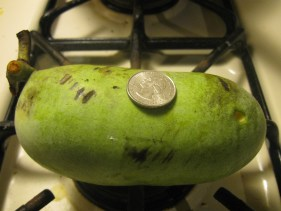 Paw Paw fruit with a quarter to show the size