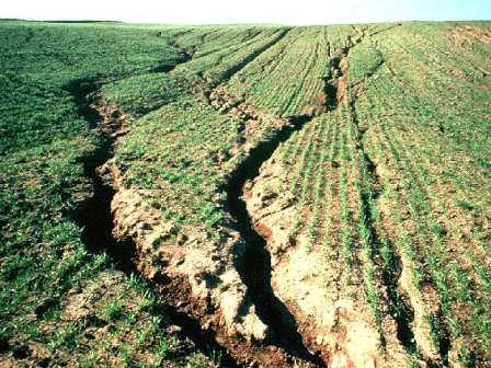 erosion in cropland, photo from soilerosion.net