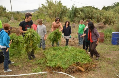 hot compost layers- green material going on in Portugal 2011