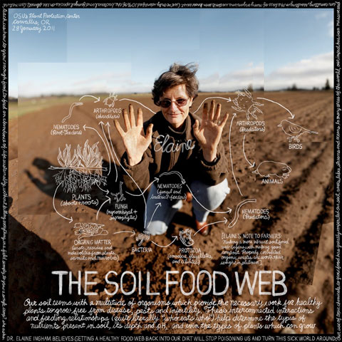 GL_LEX85_Soil_Food_Web