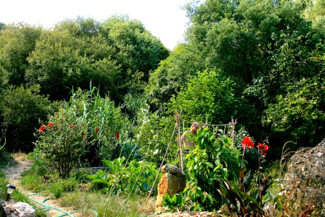young fruit trees and their guilds growing well in our Terra Alta food forest
