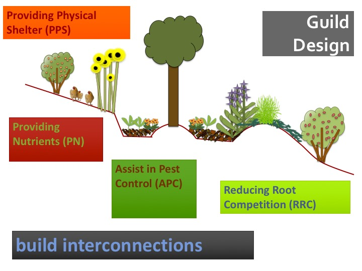 guild diagram with tree planting terrace
