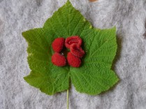 thimbleberry fruit with leaf
