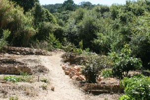 evolution of the camino, terraces and sunken beds and food forest taking off