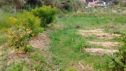 Raised beds off contour with a raised bed on contour at the end capturing runoff and planted with tropicals and sub tropicals, note the green depression. Quinta dos Sete Nomes, Colares, Portugal, 2016