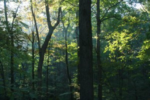 Humid Temperate Forest, Treasure Lake, the authors families land