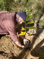 Tom planting one of the chestnuts on newly terraced zone 3 zone, Treasure Lake, 2018